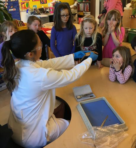 Image of The highlight of the fish study unit in kindergarten is dissecting a perch!
